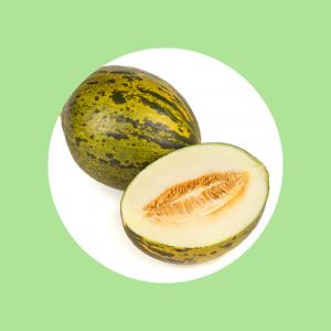 Sapo Melon