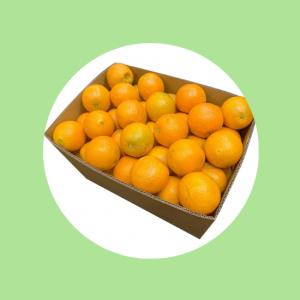 Navel Oranges Top Fruit Market